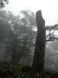 第60回:枯れゆくブナの山、檜洞丸(その9)(矢貫隆)の画像