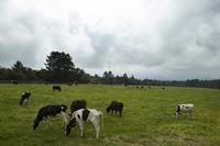 八ヶ岳周辺の立ち寄り地「まきば公園」でのひとこま。牛馬をはじめ、さまざまな動物が放牧されている。