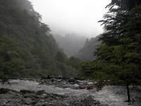 しっとりした森を抜けてたどり着いた「ゴーラ沢出合」。轟々たる水しぶきをあげ流れる川の水が、丸太の橋を飲み込もうとしていた。
