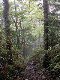 第56回:枯れゆくブナの山、檜洞丸(その5)(矢貫隆)の画像