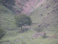 薄い緑を被った山肌に、鹿の姿を見た。