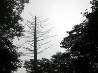 第58回:枯れゆくブナの山、檜洞丸(その7)(矢貫隆)の画像