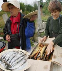 路傍で売っていた「オムリ」という30cm大の魚と、その薫製。薫製は1匹15ルーブル(約60円)。「ニシンとタラに似て美味でした」。