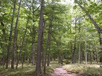 樹木が生い茂った森のなかを歩く。