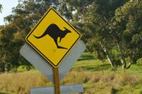 WRC第10戦ラリー・オーストラリア報告(その2)