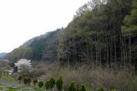 """第90回:""""奇跡の山""""、高尾山に迫る危機その2:1200年前から守られてきた森(矢貫隆)の画像"""