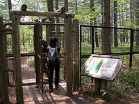 やがて、湿原の入り口が見えてくる。湿原地帯は金網で保護される。