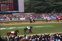 スマートフォンに保存されていた最新の競馬関係の写真は、エイシンフラッシュが勝った2010年の日本ダービーでした。意外と写真って残していないものですね。写真を見ていたら、ひどいスローペースで、どうしようもないレースだったことを思い出しました……。