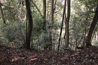 """第92回:""""奇跡の山""""、高尾山に迫る危機その4:小さな山に異なる植物分布(矢貫隆)の画像"""