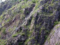 草ぐらいしか生えていない岩だらけの山の斜面で、職人たちが植林作業を続けていた。