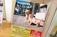 2017年末に西武池袋本店で催されていた、動物写真家岩合光昭氏の写真展「ねこといぬ」。まあ、多くは語りますまい。ただただ最高でした。