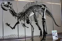 ボディには、恐竜の肋骨からヒントを得たという環状骨格構造の「リブボーンフレーム」を採用。4つの閉断面構造ピラーなどで、堅牢さをアピールする。