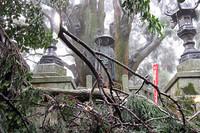一番厳しかったのが12番焼山寺への登り。折しも冷たい雨が雪になり、さらには氷砂糖ぐらいのあられが降り注いだ。その途中にある大師像、浄蓮庵に着いた瞬間、大きな杉の枝が氷の重みに絶えかねて目前に落ちてきた。
