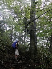 雨に濡れる美しいブナの森を歩く。
