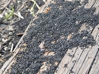 この黒い物体は、銅の精錬過程ででる残りかすと思われる。