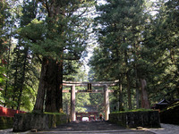 日光・東照宮の門を前にズラリと並ぶ杉。建設当時、500年ほど前に静岡県から運んで植林した木々は、いまや立派な巨木となりそそり立っている。