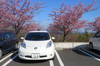 神奈川県小田原市早川にある一夜城歴史公園の駐車場で。河津桜が満開だった。