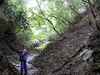 登山道の入り口は、青々とした緑が映える沢だった。