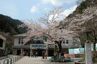 ケーブルカーとリフト乗り場。うららかな平日の正午前、満開の桜が訪れる観光客を出迎えていた。