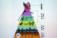 自然は、多様な生物が存在する生態系バランスの上に成り立っていることを示したイラスト(資料:日本生態系協会)