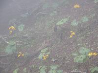 第61回:枯れゆくブナの山、檜洞丸(その10)(矢貫隆)の画像