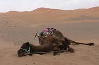 モロッコから愛を込めて〜BMW国際試乗会日記 その7「旅の終わり」
