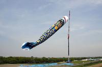 これが「ジャンボこいのぼり」。全長100m、口と目玉の直径が10m、重さ350kgで、もちろん世界最大。やや下に見える小さな吹き流しのようなものが、普通のこいのぼり(全長10m)である。こいのぼりもスゴイが、これを揚げる移動式の巨大なクレーンにも驚いた。