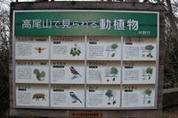 """第89回:""""奇跡の山""""、高尾山に迫る危機その1:日本の植物の3割が集まる山(矢貫隆)の画像"""